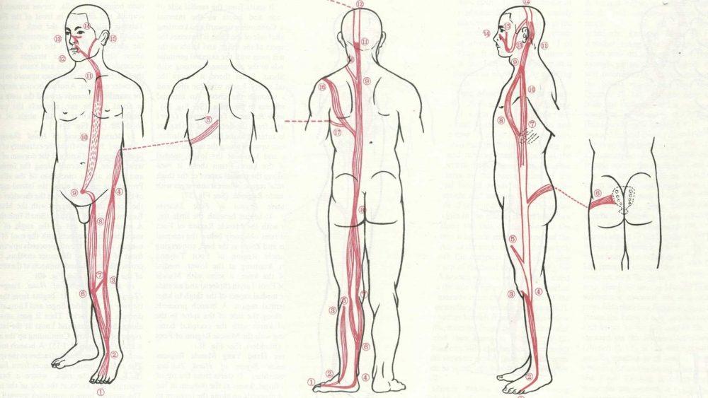 Body Posture